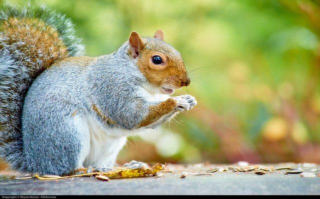 Greensboro Squirrel Removal